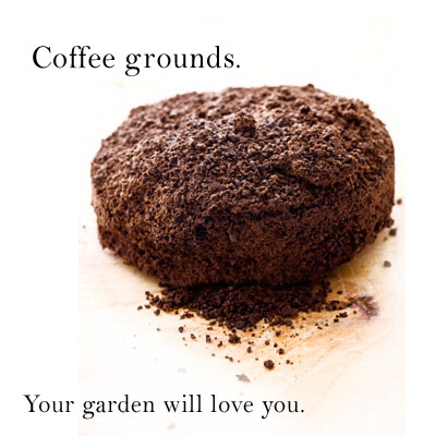 add coffee grounds to your garden - as mulch, as food, as compose - its all good